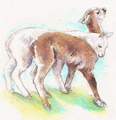 Les animaux peints à l'AQUARELLE - Page 15 Alpaca10
