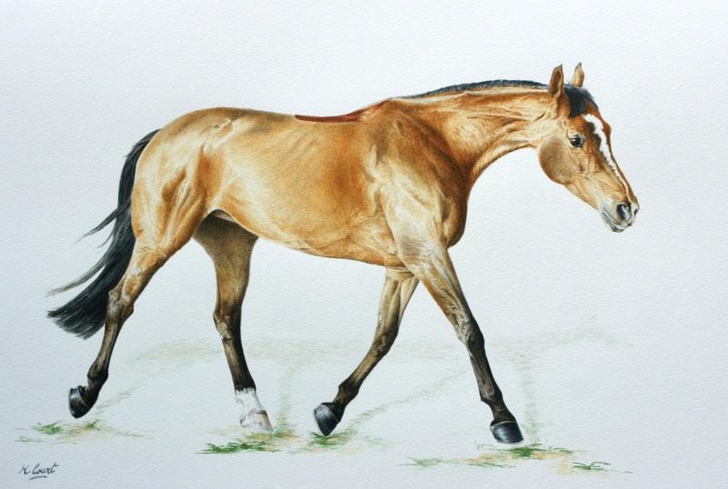 Les animaux peints à l'AQUARELLE - Page 11 Big10