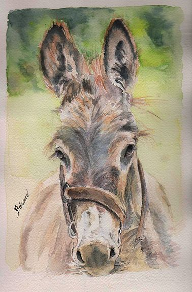 Les animaux peints à l'AQUARELLE - Page 12 C0244110