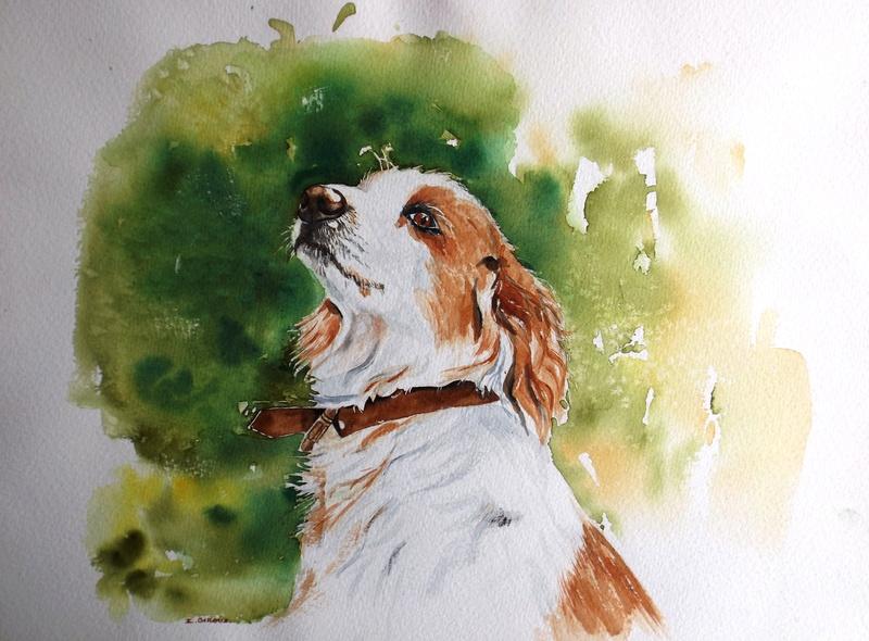 Les animaux peints à l'AQUARELLE - Page 16 Dscf3910