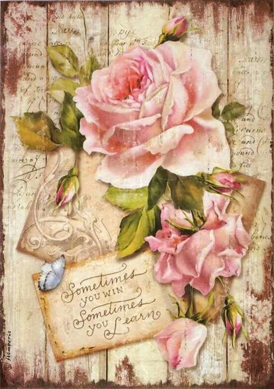 Le doux parfum des roses - Page 19 Ff434210