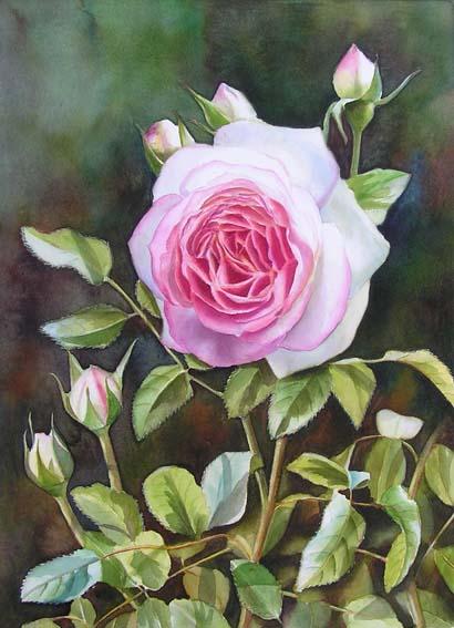 Le doux parfum des roses - Page 18 Rose-e10