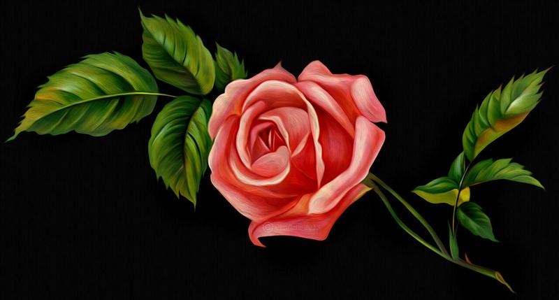 Le doux parfum des roses - Page 18 Single10