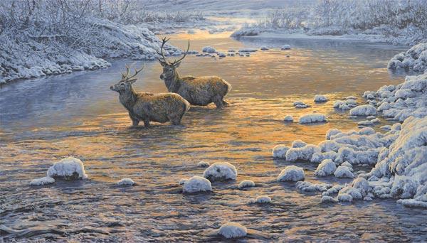 L'eau paisible des ruisseaux et petites rivières  - Page 21 Stags-10