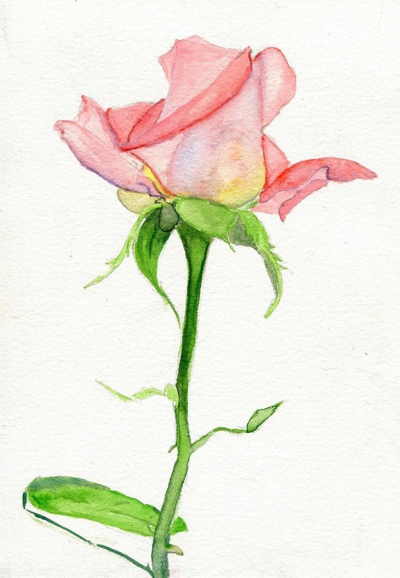 Le doux parfum des roses - Page 21 Tumblr90