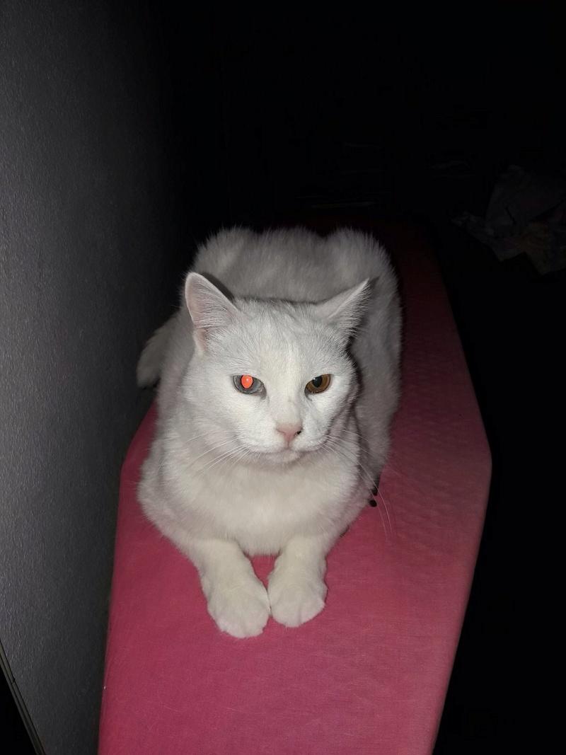 Yuna en su casita - Página 2 Yuna110