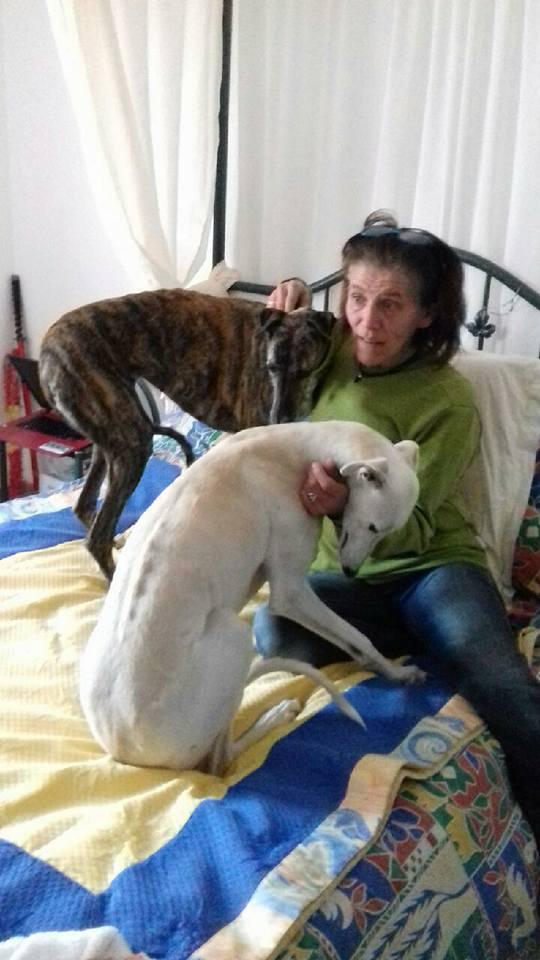 ROBENA MAMIE DE 2009 GALGA BRINGEE  Adoptée  23844510