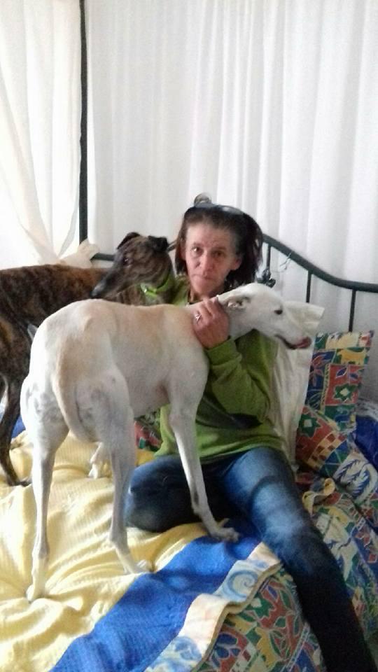 ROBENA MAMIE DE 2009 GALGA BRINGEE  Adoptée  23916010