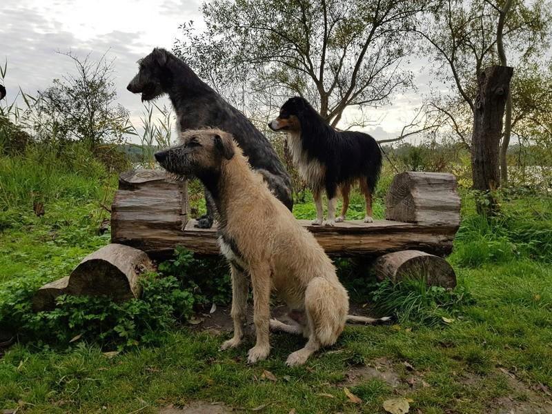 GAEL et Nefarian: Irish Wolf  22368911