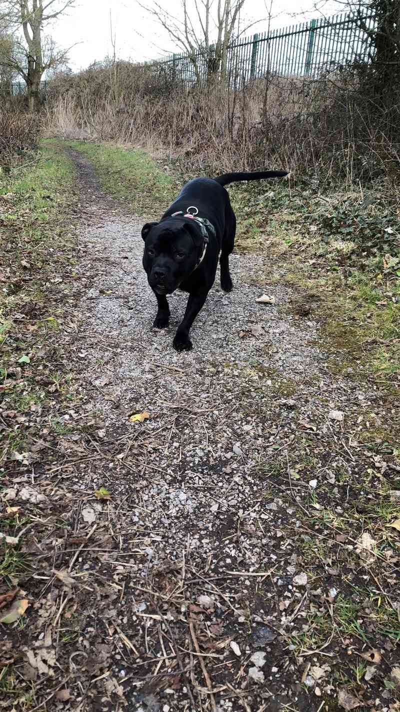 Staffy or Panther 71bdd410