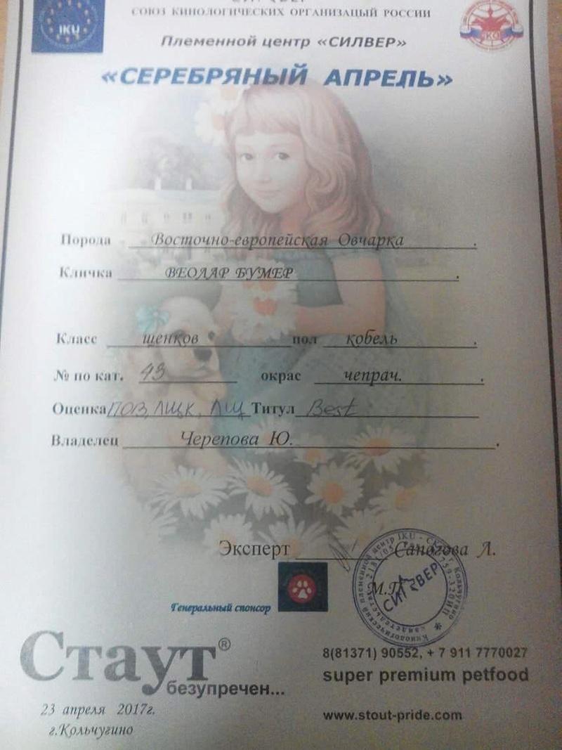 ВОСТОЧНО-ЕВРОПЕЙСКАЯ ОВЧАРКА ВЕОЛАР БУМЕР 1d867810