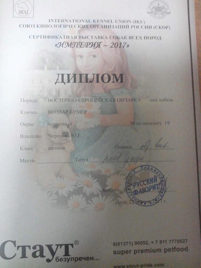 ВОСТОЧНО-ЕВРОПЕЙСКАЯ ОВЧАРКА ВЕОЛАР БУМЕР 7a748410