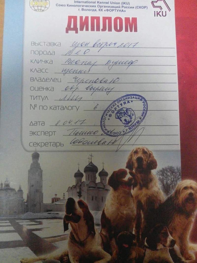 ВОСТОЧНО-ЕВРОПЕЙСКАЯ ОВЧАРКА ВЕОЛАР БУМЕР Aa9e3010