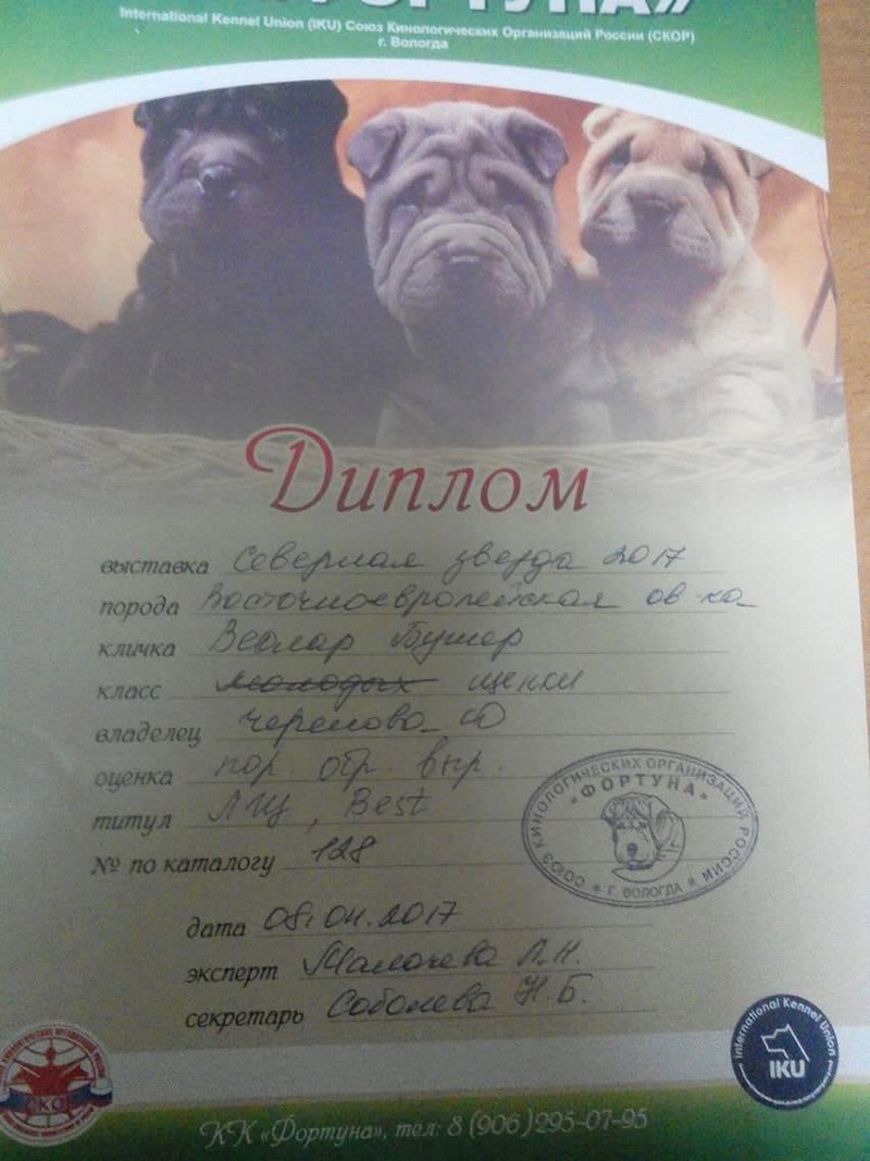 ВОСТОЧНО-ЕВРОПЕЙСКАЯ ОВЧАРКА ВЕОЛАР БУМЕР Dbc89a10