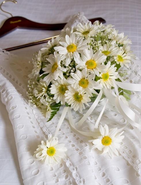 Sự tích hoa cúc tây Hoa-cu13