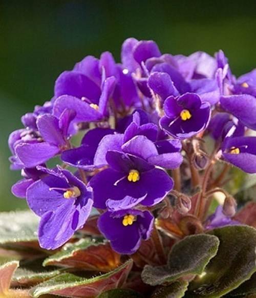10 loài hoa được mệnh danh là đẹp nhất thế giới Hoa-de10