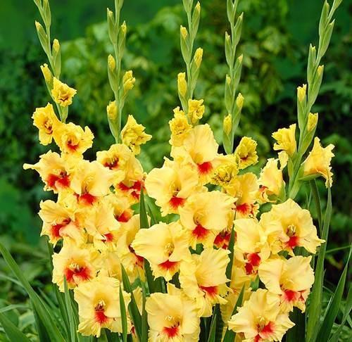 10 loài hoa được mệnh danh là đẹp nhất thế giới Hoa-de11