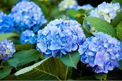 10 loài hoa được mệnh danh là đẹp nhất thế giới Hoa-de19
