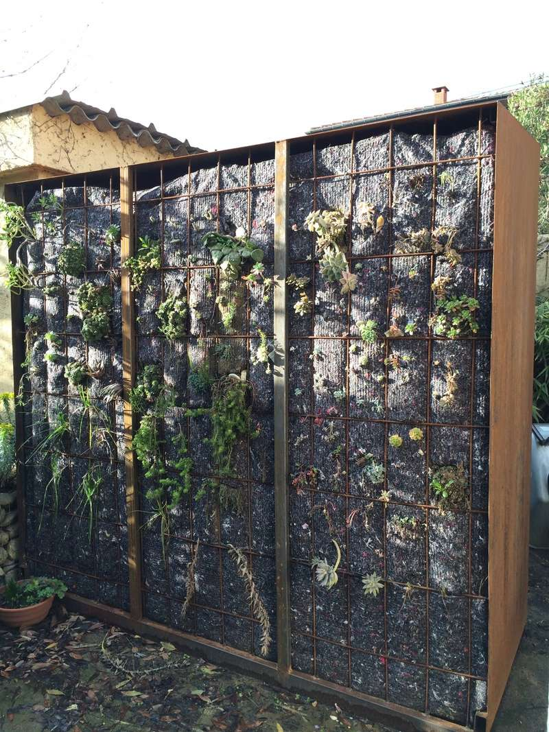 Mon mur végétal de succulentes Img_6311