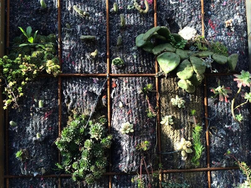 Mon mur végétal de succulentes Img_6313