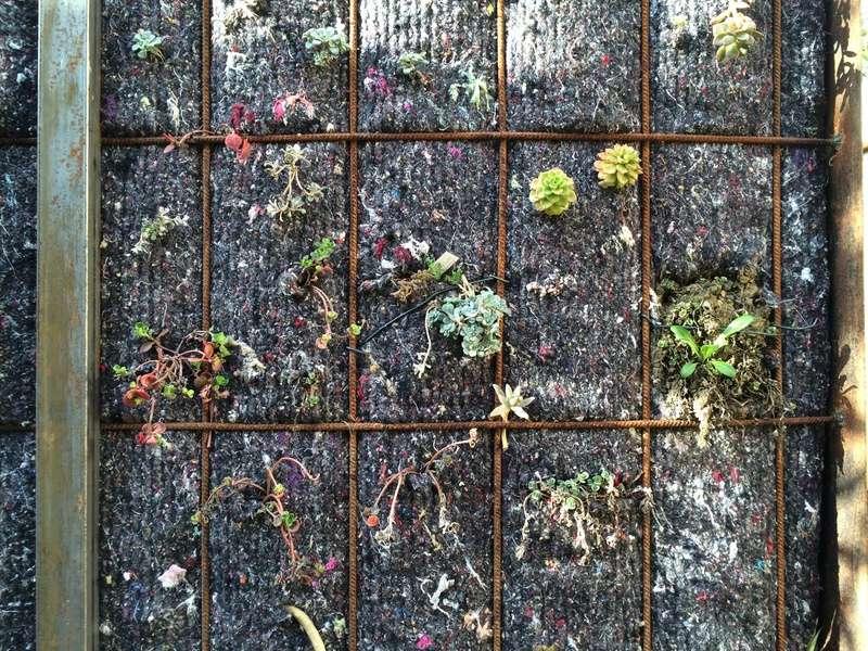Mon mur végétal de succulentes Img_6314