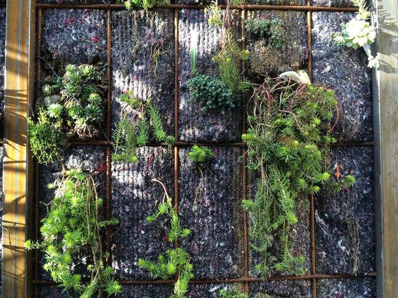 Mon mur végétal de succulentes Img_6316