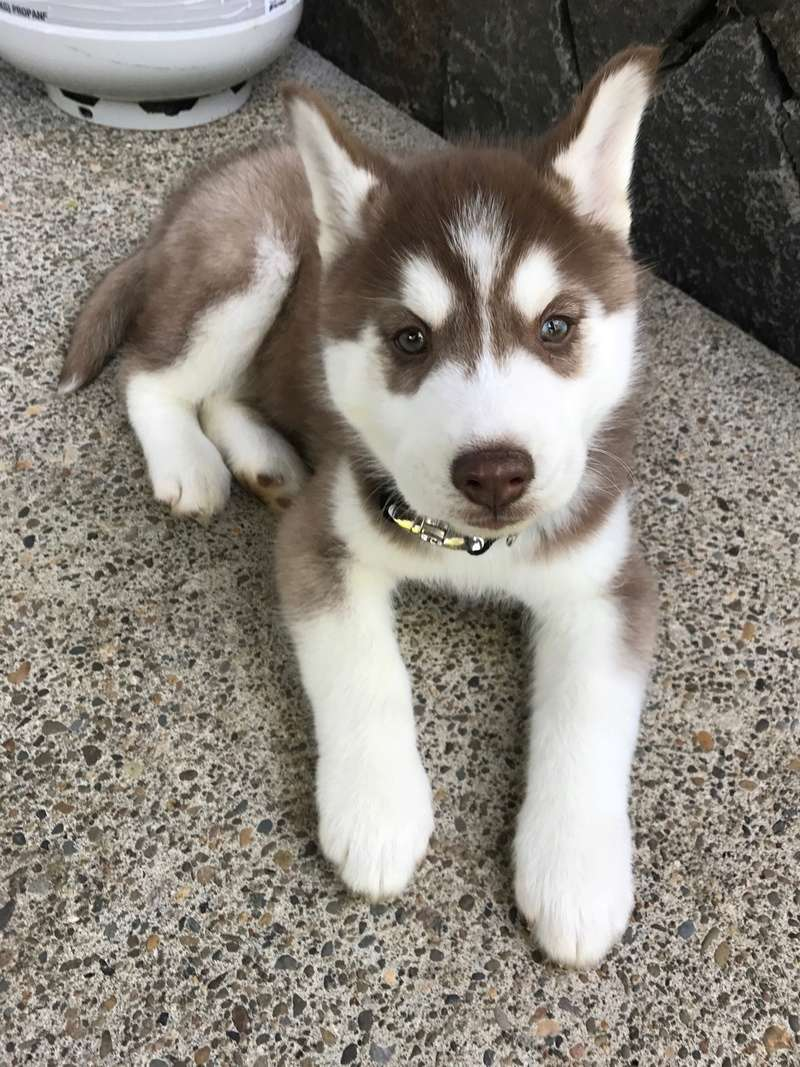 Concerned about our puppy.  78510