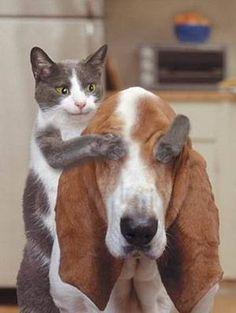 Basset-hound & cats addicts- wouaf & miaou