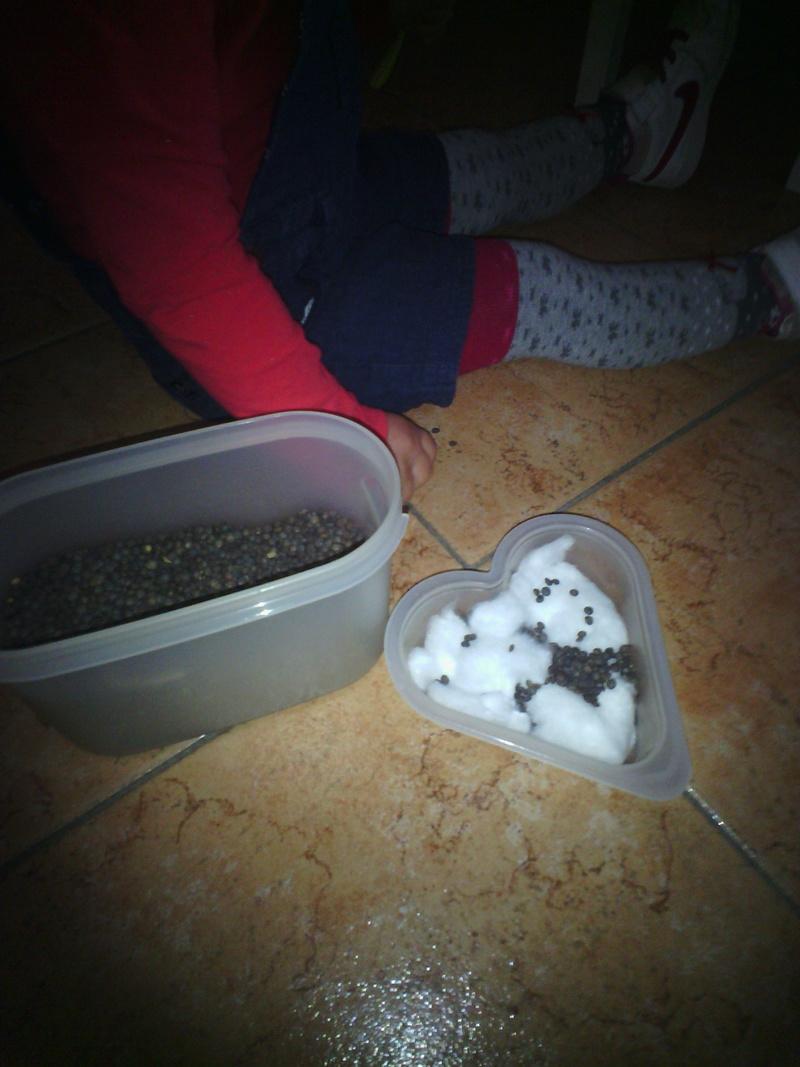 Jardinage pour enfants   Comment faire pousser des lentilles pour Noël ? Img_2039