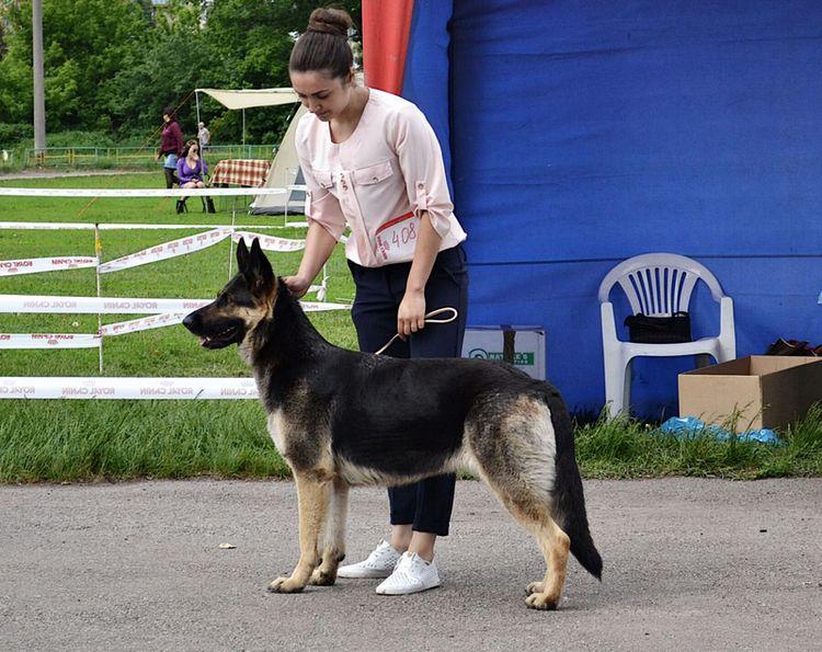 19-20.05.2018 CAC +CACIB  (Харьков) Dsc_2314