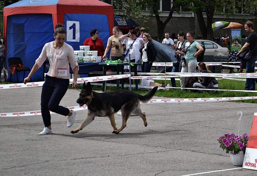 19-20.05.2018 CAC +CACIB  (Харьков) Dsc_2321