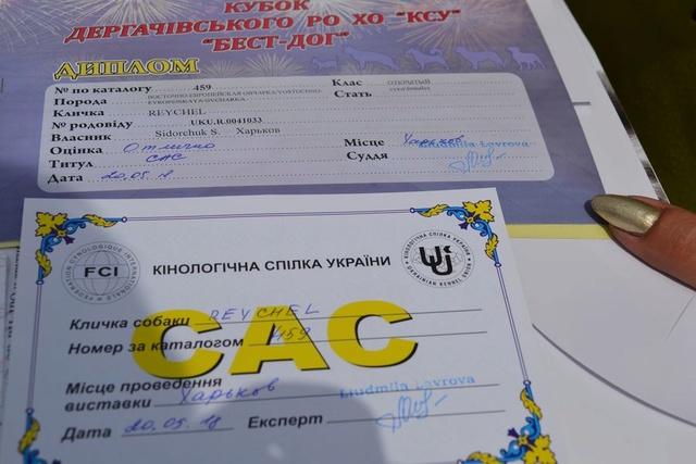 19-20.05.2018 CAC +CACIB  (Харьков) Dsc_2415