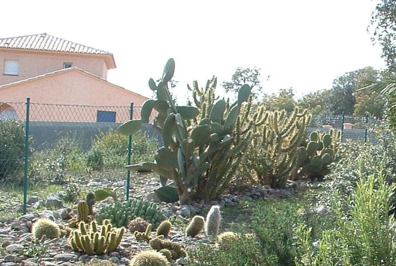 Aus einer Wüste entsteht ein Exotengarten Dscf0110