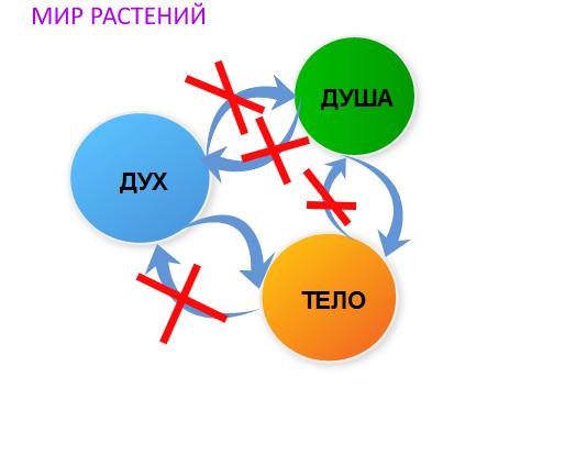 УРОК 12. МАГИЯ РАСТЕНИЙ  158bmt10
