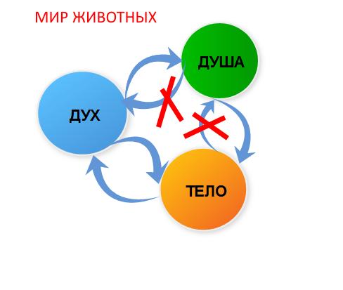 УРОК 12. МАГИЯ РАСТЕНИЙ  Bj13a10