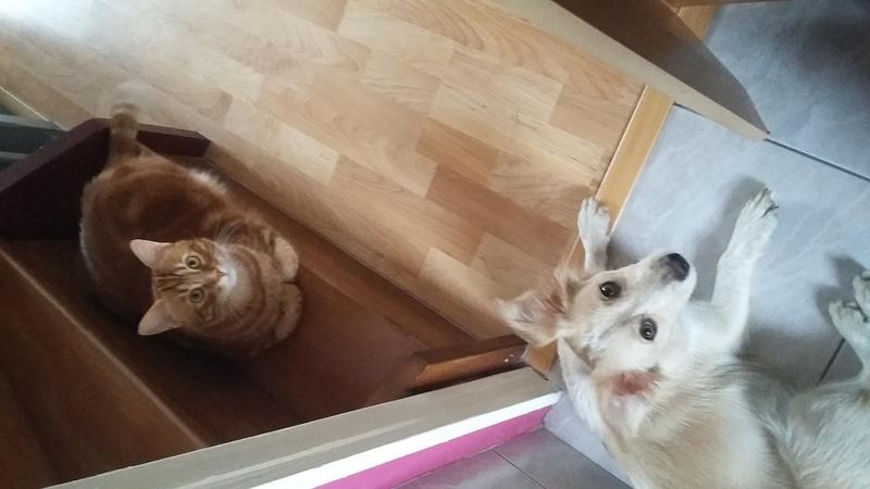 DIVA - chiot femelle croisée de petite taille, née octobre 2016 - (Bucarest) CARMINA - adoptée par Justine et Sébastien (72) - Page 4 20170711