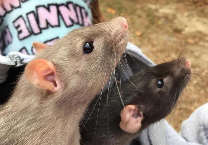 Django & Milo, mes petits fripouilles d'amour ! - Page 2 23283510