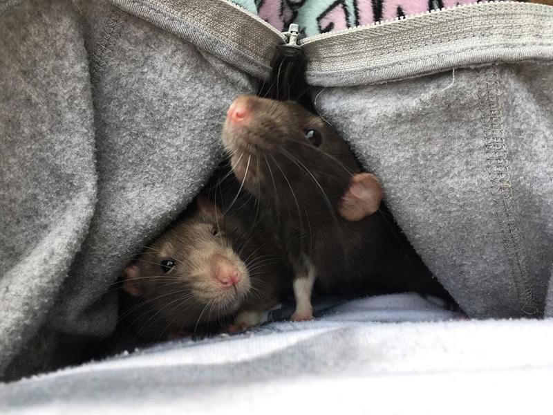 Django & Milo, mes petits fripouilles d'amour ! - Page 2 23315710