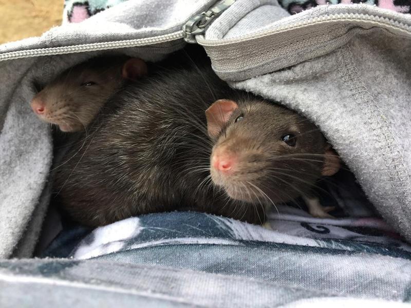 Django & Milo, mes petits fripouilles d'amour ! - Page 2 23318510