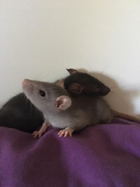 Django & Milo, mes petits fripouilles d'amour ! - Page 3 23601912