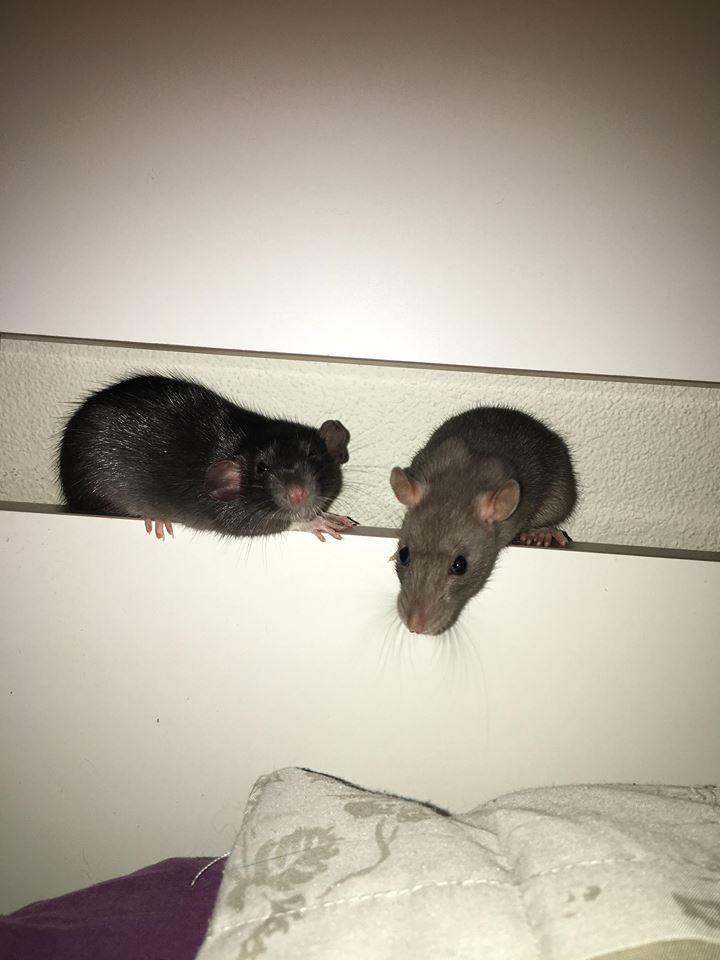 Django & Milo, mes petits fripouilles d'amour ! - Page 3 25324010