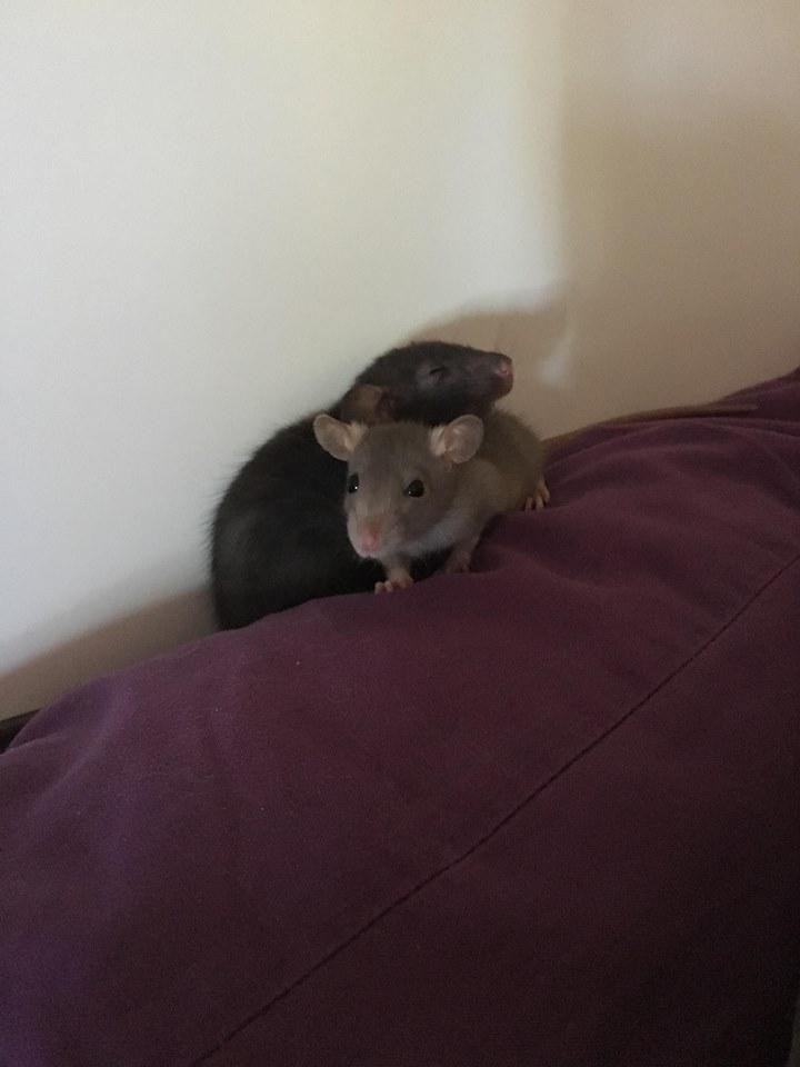 Django & Milo, mes petits fripouilles d'amour ! - Page 3 25360110