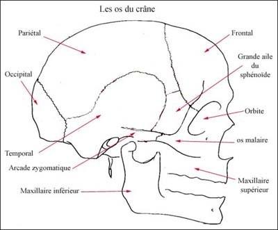 Le Guide des premiers soins Os-du-10