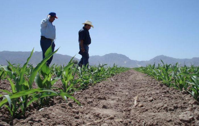 Abundancia de lluvias dejara excelentes cosechas Cosech10
