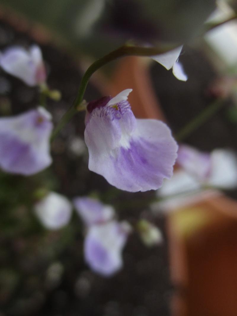 Photos olivier Img_0513
