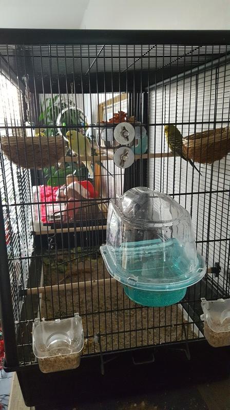 Un avis de ma cage. AIDE 20171215