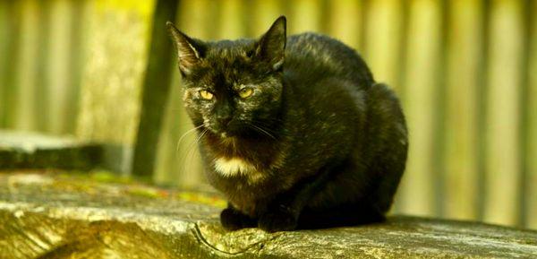 Кошка - индикатор кармы. Crop-810