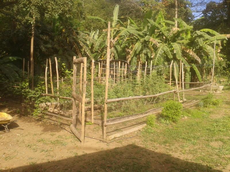 El huerto de nuestra casa. 2010-118