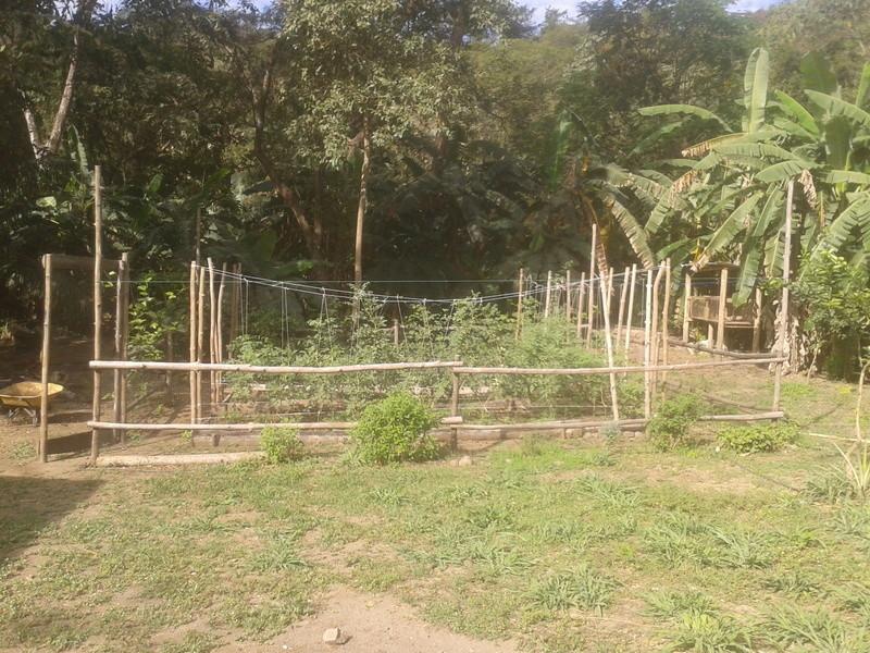 El huerto de nuestra casa. 2010-119