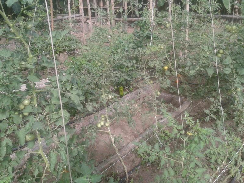 El huerto de nuestra casa. 2010-120